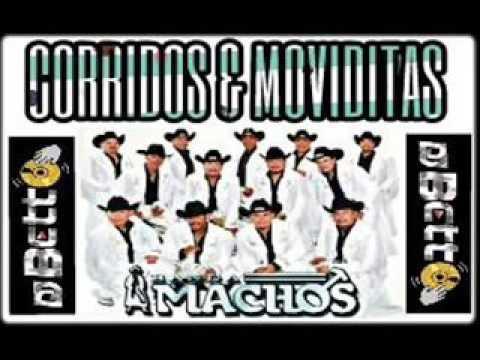 BANDA MACHOS [CORRIDOS & MOVIDITAS (CUMBIAS) ]
