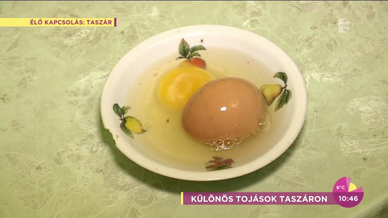 hogy néz ki a helmint tojás