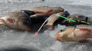 Крупный КАРАСЬ гнет КИВКИ, ТОПИТ УДОЧКИ!! Зимняя рыбалка на мормышку весной