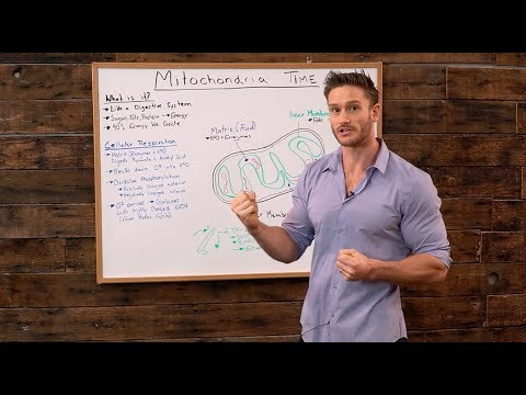mitochondria:-how-our-bodies-produce-energy-from-nutrients--thomas-delauer