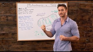 Mitochondria: How Our Bodies Produce Energy from Nutrients- Thomas DeLauer
