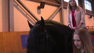 Лошади фризской породы