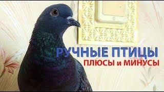 Ручные птицы. Плюсы и минусы