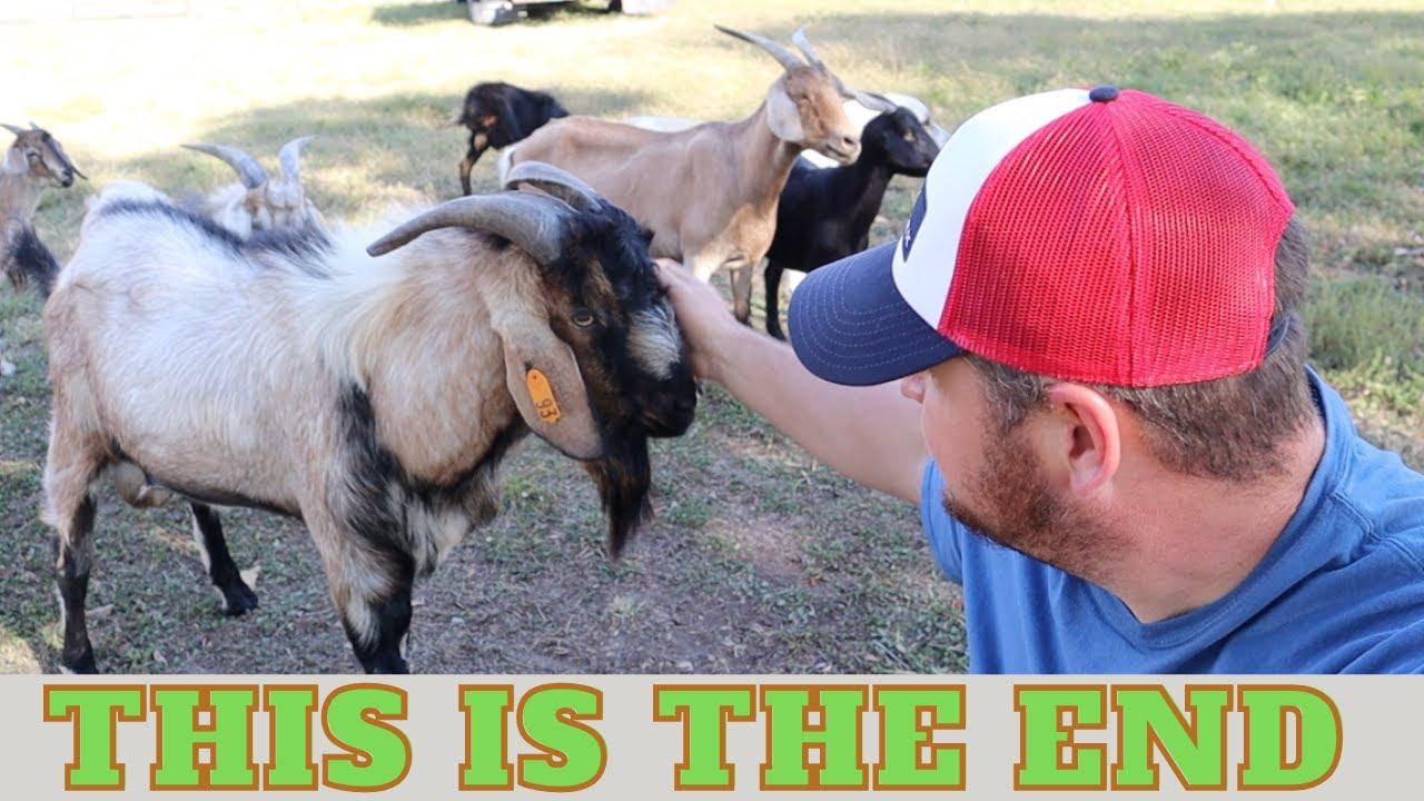 Saying Goodbye To JERKFACE JR. The Kiko Goat