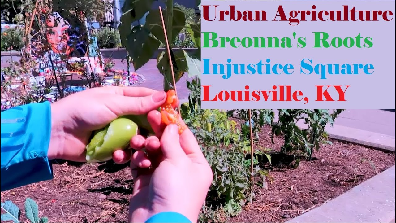 Urban Agriculture Tips in Breonna's Roots' garden at Injustice Square Park - Louisville, KY