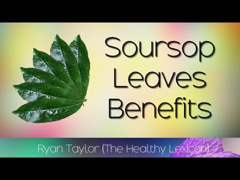 soursop-leaves:-benefits-and-uses-(graviola)