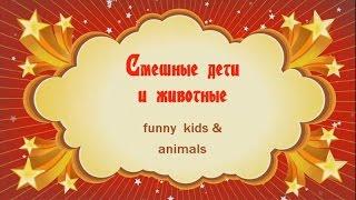 Смешные животные  Смешные умные псы и отважный кот массажист!