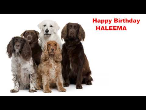 Haleema  Dogs Perros - Happy Birthday