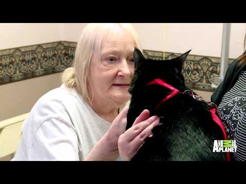 This Friendly Kitty Loves To Brighten People's Days During Hospital Visits