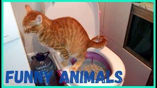 Я РЖАЛ ПОЛ ЧАСА СМЕШНЫЕ ЖИВОТНЫЕ ПРИКОЛЫ С КОТАМИ И СОБАКАМИ ЛУЧШИЕ ПРИКОЛЫ Funny Pets 12