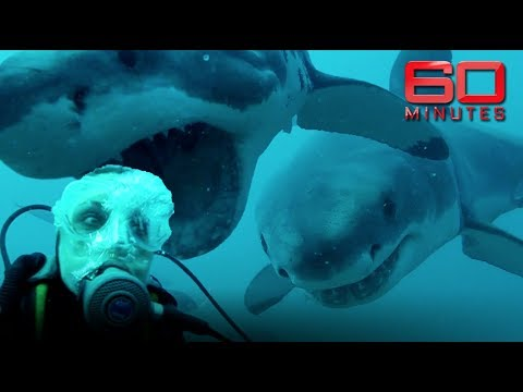 Face To Face With Great White Sharks: Outside The Cage And Totally Exposed | 60 Minutes Australia