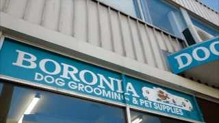 Boronia Dog Grooming & Pet Supplies - All Your Pet Grooming Needs At The Foot Of The Dandenongs