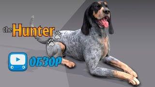 Собаки в игре theHunter - Гончая | ОБЗОР |
