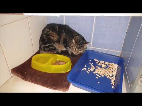 Вопрос: Почему кошки равнодушны к смерти сородича ..?