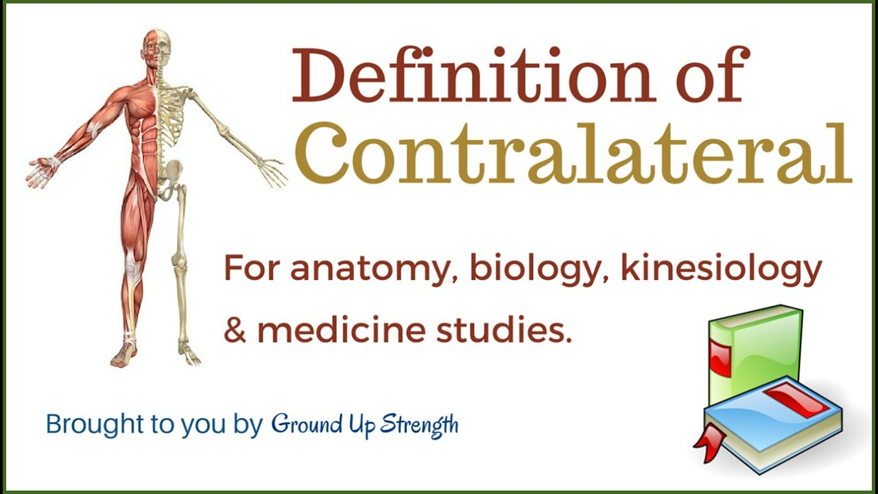 Contralateral Definition Anatomy Kinesiology Medicine Youtube