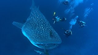 Shark Biology (HD) | JONATHAN BIRD