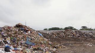 Long shot of cows and birds looking for edibles in a city dump - unhygienic food