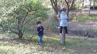 木登り Tree Climbing
