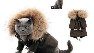 видео Пошив одежды для животных
