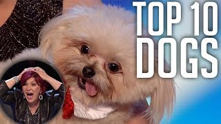 10 INCREDIBLE Dog Tricks! Dancing, Acrobatics & More! Got Talent Global