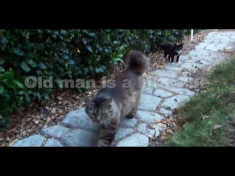 cat c training london