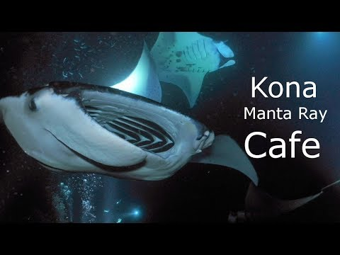 Why Do Manta Rays Come To Lights?
