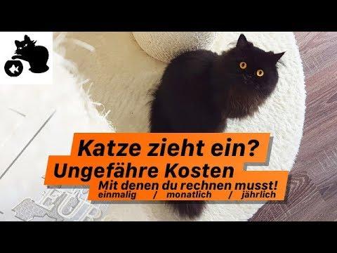 wie viel kostet eine katze monatlich katze zieht ein ungef hre kosten bersicht youtube. Black Bedroom Furniture Sets. Home Design Ideas