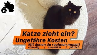 🔥Wie viel kostet eine Katze monatlich? Katze zieht ein - ungefähre Kostenübersicht