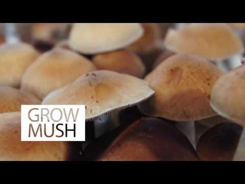 Mini Mushroom Kit with Live Mycelium