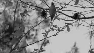 Download lagu karaoke kepada angin dan burung-burung (franky n jane)