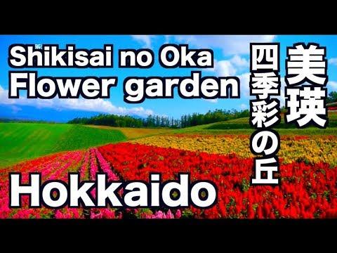 美瑛・四季彩の丘 北海道 Flower garden hill of SHIKISAI 富良野観光 美瑛観光 ディスカバーニッポン