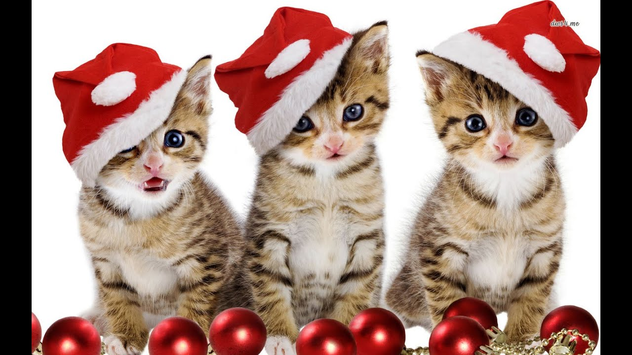 Awesome Cat Christmas Wishes   YouTube