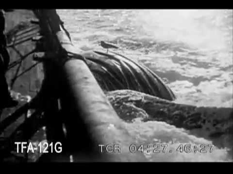 Whaling in the South Pacific, 1920s