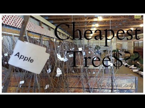 Where To Find The Cheapest Trees - Start An Orchard Today!