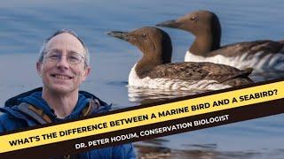 Research: Marine Birds of the Salish Sea