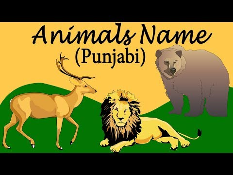 Punjabi Animals Name For Beginners | Matra & Vowels Learning | Pronounce The Words Catrack Kids
