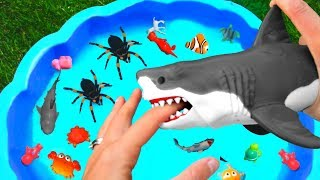 Learn Wild Animals Farm Animals Zoo Animals Dinosaurs For Kids Video in Pool Learn Colors for Kids