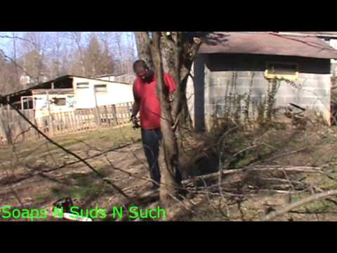 Trimming A Redbud Tree, Trimming A Tree,