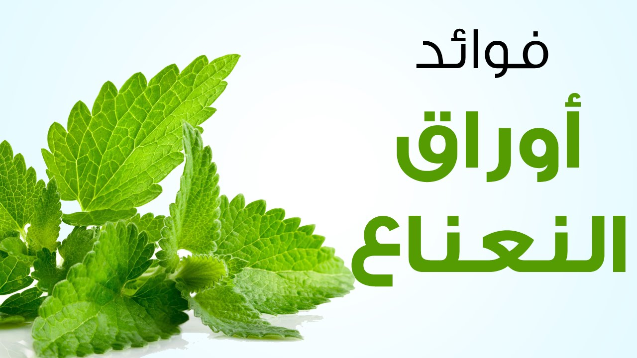 maxresdefault فوائد أوراق النعناع    Photo mint leaves
