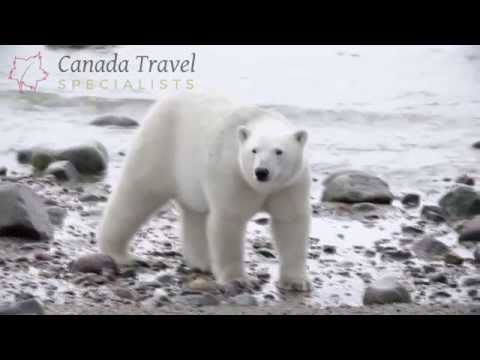 Churchill Wild Polar Bear Safaris | Canada Wildlife Holidays 2017 / 2018