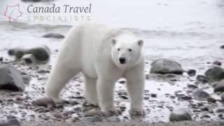 Wildlife Exploration