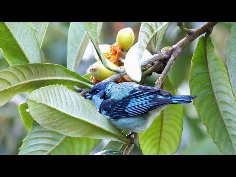 Birds Of Mexico