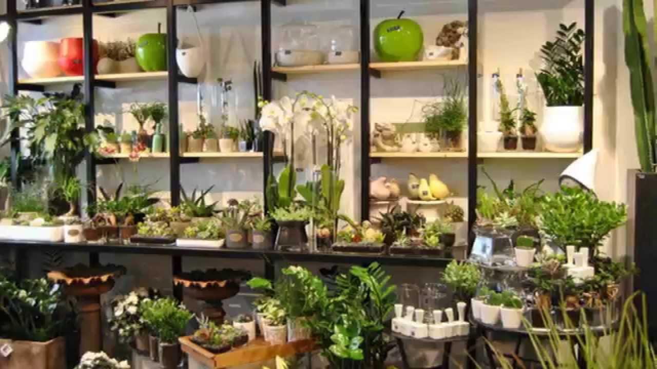 Fleurodet artisan fleuriste quimper pr sentation de la for Boutique plante