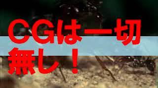 CGは一切無し。本物の蟻を使ったパニック作品。 環境汚染で凶暴化した殺...