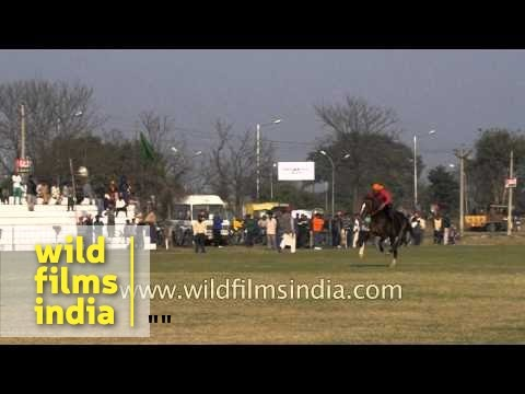 Horse and man fly in unison - Kilaa Raipur Rural Sports Festival