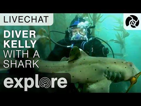 Diver Kelly With A Shark - Anacapa Underwater Live Chat