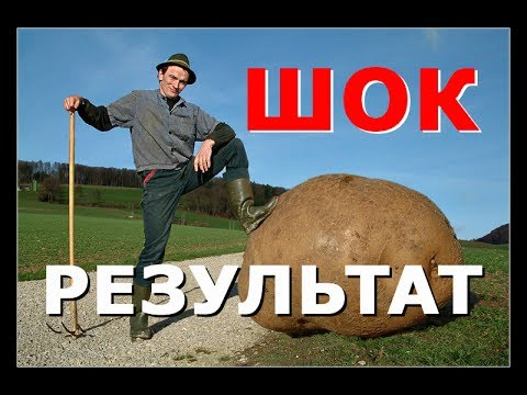 видео: КАРТОФЕЛЬ. Посадка картофеля без лопаты. ДЛЯ ТЕХ У КОГО БОЛИТ СПИНА / planting of potatoes