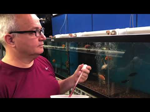 Visit To Gerber's Tropical Fish In Dayton, OH