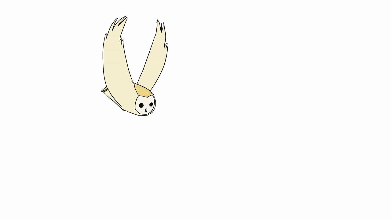 owl flying 2d animation youtube