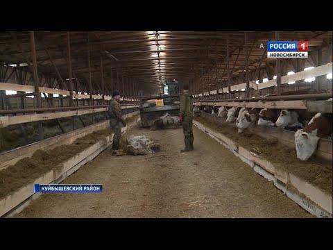 Вопрос: Для чего используется шрот в сельском хозяйстве?